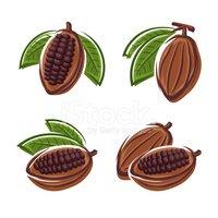 Cacao, unt de cacao si cuvertura