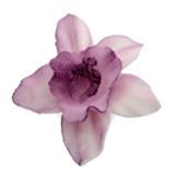 Orhidee din zahar violeta 052811 PJT set 10 buc