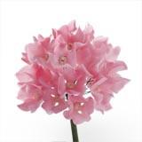 Hortensie din zahar roza 054303 PJT